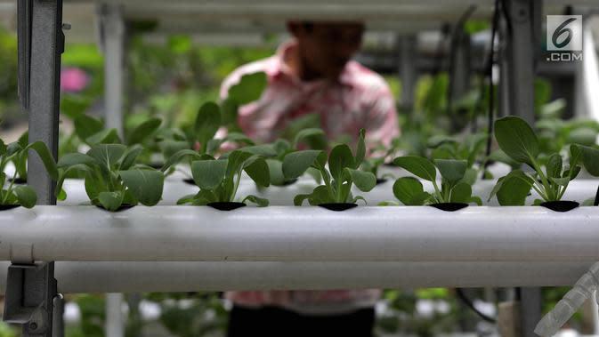Tanaman hidroponik berupa sayuran yang ditanam warga di kawasan Mangga Besar, Jakarta, Selasa (13/11). Warga sekitar memanfaatkan lahan alternatif untuk bercocok tanam sayur mayur. (Liputan6.com/Johan Tallo)