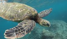 騷擾「小琉球海龜」卻沒處分?背後原因曝光 網怒:該罰
