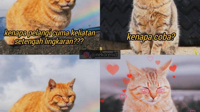 7 Meme Kucing Saat Pdkt Ini Kocak Bikin Ngakak