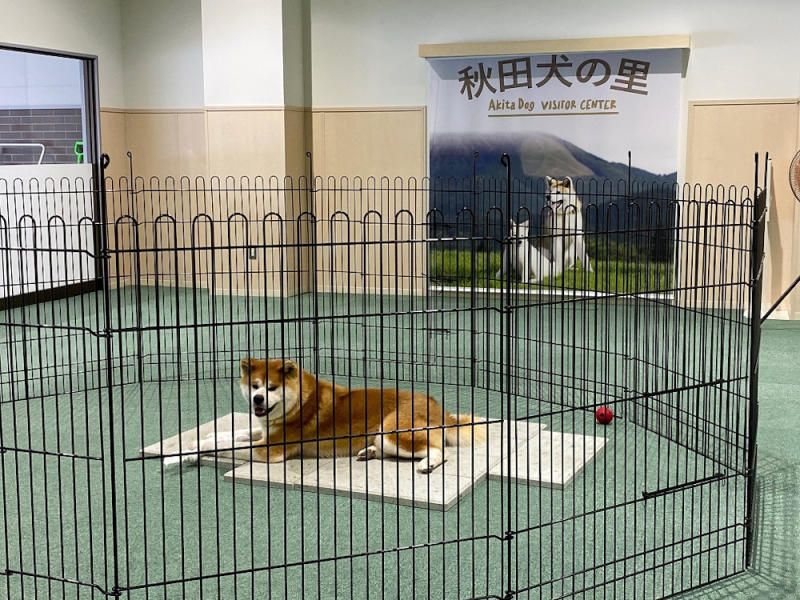 The Akita Dog Museum in Akita Prefecture is a great hang-out spot for pooches and dog lovers. — Picture by Melanie Chalil