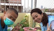 聖家啟智中心打造夢想菜園培育善能量