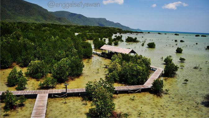Hutan Mangrove.   via: karimundieng.com