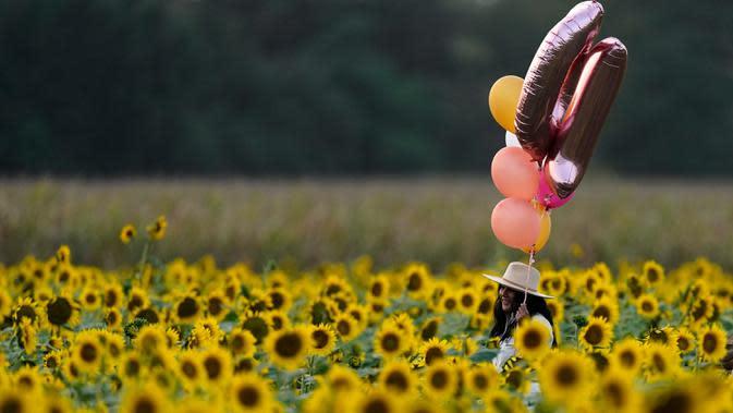 Seorang perempuan dengan balon melintasi ladang bunga matahari di Grinter Farms, dekat Lawrence, Kansas pada 7 September 2020. Ladang seluas 26 acre yang ditanam setiap tahunnya oleh keluarga Grinter itu menarik ribuan pengunjung selama akhir musim panas saat mekarnya bunga. (AP Photo/Charlie Riedel