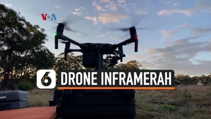 VIDEO: Drone Inframerah untuk Selamatkan Koala, Seperti Apa?