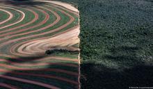 WWF:歐盟是全球破壞森林的第二大推手