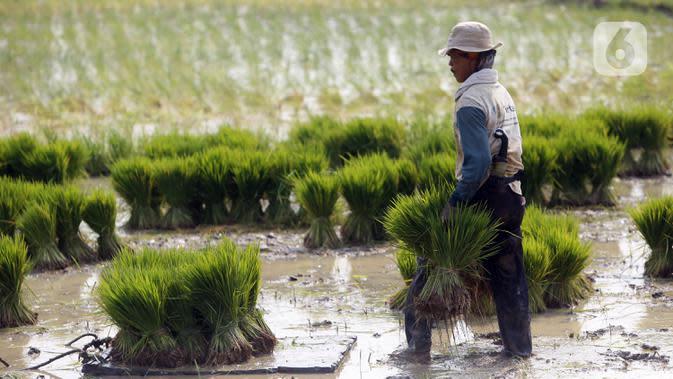 Petani menanam padi di sawah kawasan Tangerang, Banten, Jumat (7/8/2020). PDB pertanian tumbuh 16,24 persen pada triwulan-II 2020 (q to q), bahkan secara y0y sektor pertanian tetap berkontribusi positif yakni tumbuh 2,19 persen. (Liputan6.com/Angga Yuniar)