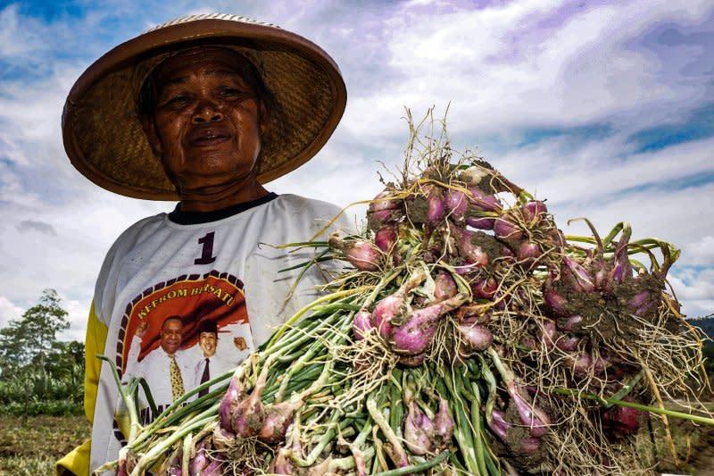Nilai tukar petani Papua naik 0,07 persen