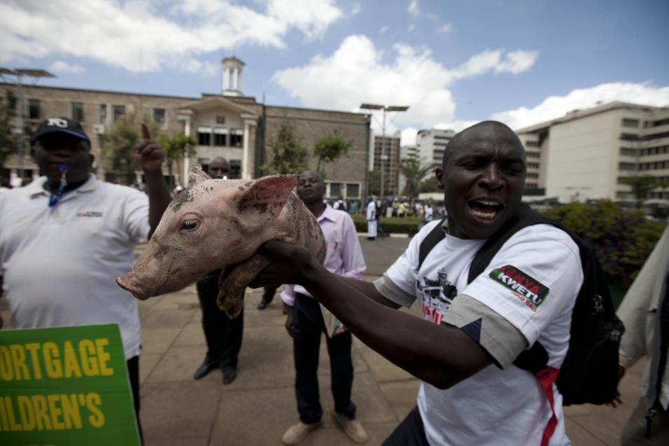 """A Kenyan  demonstrator holding a piglet moves towards the gate of parliament  in Nairobi, Kenya, Tuesday, May 14, 2013. Police fired tear-gas, water cannons and swung their batons at protesters gathered outside Kenya's parliament building to pile pressure on the country's legislators to drop demands for a salary increment. About 250 people carrying placards and banners marched through the Nairobi's city center and staged a sit in at the entrance legislators use to enter parliament. There the protesters released about two dozen piglets and a pig to symbolize """"the greed of the country's legislators."""" (AP Photo/Sayyid Azim)"""