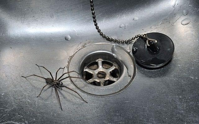 Arachnophobes should stay out the house at 7.35pm becaIt'use that is the time spiders are most likely to be scuttling around, a new study suggests. Householders are likely to see more creepy crawlies in the coming weeks as Britain hits peak spider mating season, which runs until the first week of October. And because females tend to spin their webs on door and window frames, males come inside to track down a prospective partner. Prof Adam Hart, an entomologist at the University of Gloucestershire, collected more than 10,000 records from more than 250 locations in Britain to find out when spiders are most likely to be seen. He discovered that peak sightings happen at 7.35pm in the evening.There was also a slight peak in sightings at 6–8 am which could refect morning observations of spiders trapped in sinks or baths overnight, said the researchers.