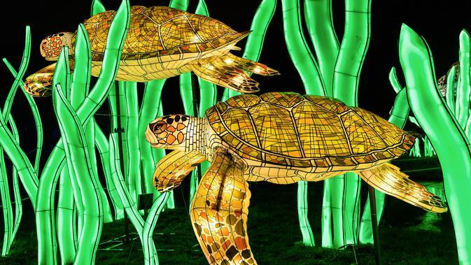 Gambar pada 15 November 2019 menunjukkan patung kura-kura diterangi lampu berwarna sebagai bagian dari pameran festival cahaya di Kebun Binatang Jardin des Plantes, Paris. Festival Cahaya bertajuk
