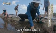 百年石頭屋 文資保衛戰  被消失的漁村?  華視新聞雜誌