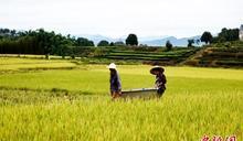 中國淹大水還「秋糧豐收」? 糧食公司紛紛漲價打臉官宣