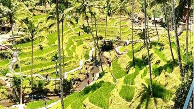 Tegalalang Rice Terrace di Ubud, Bali. (dok.Instagram @bali_beachclub/https://www.instagram.com/p/B6mqt1LFT4W/Henry)