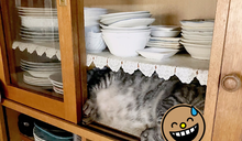 推主想吃冰淇淋走進廚房 赫然驚見碗盤櫃「長出貓來」
