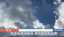 鳥迷們大飽眼福 國慶鳥準時報到來祝壽