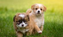 寵物購買停看聽:喜歡品種犬貓,購買前先想清楚的事!