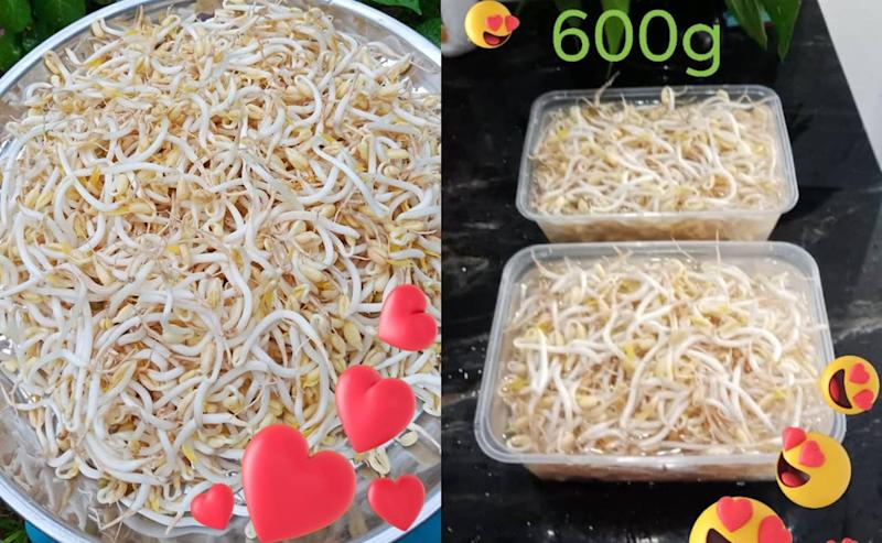 Housebound Malaysians have been feeling inspired by Chew's guide on planting bean sprouts at home. — Pictures from Facebook/meeho.chew.18