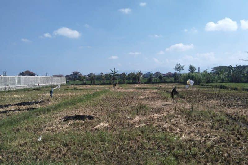 Sekitar 400 hektare lahan pertanian di Mataram berpotensi kekeringan