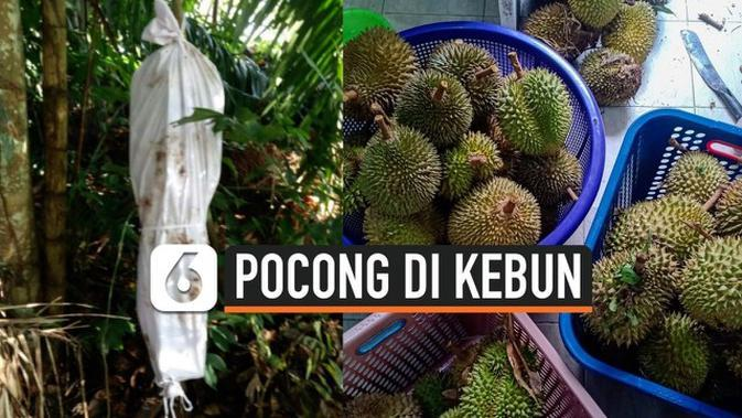 VIDEO: Gempar, Penampakan Pocong di Kebun Durian