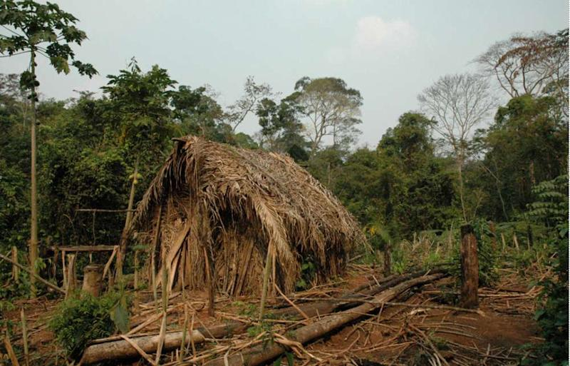 Inside the Brazil home of Amazon tribe's lone survivor