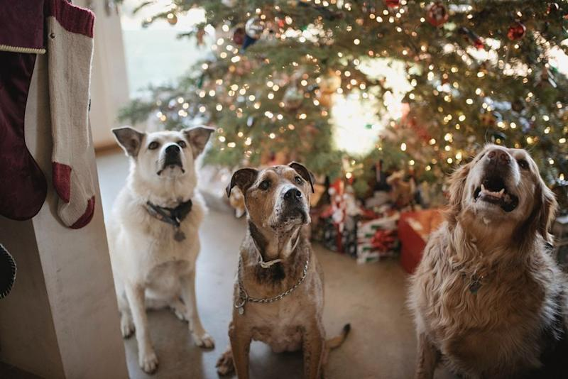 The campaign by Pet Lovers Centre aims to raise 3,600kg of pet food this year. — Picture from Unsplash