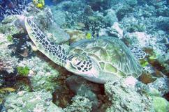 海龜海龜,你的鼻子怎麼了?