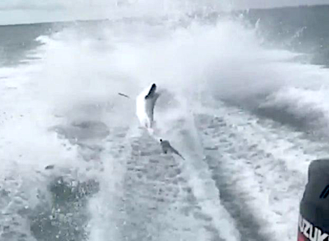 Video of a speeding boat violently dragging a shark went viral on Monday. Now, conservation officials have launched an investigation to see if any laws were broken.