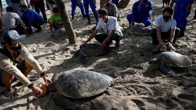 Orang-orang bersiap untuk melepasliarkan penyu hijau (Chelonia mydas) di Pantai Kuta, dekat Denpasar, Rabu (5/8/2020). Sebanyak 25 dari 36 ekor penyu hijau hasil sitaan dari upaya penyelundupan di perairan Serangan, Denpasar, dilepasliarkan. (SONNY TUMBELAKA/AFP)