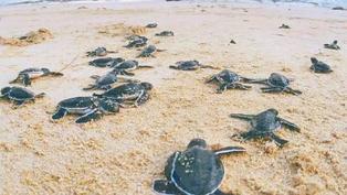 政府擬擴大深灣禁區保護綠海龜 裝攝影機多巡邏加強監察