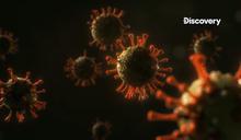 武漢肺炎》本土藥廠傳捷報!國衛院:治療武肺新藥 罕見可抑制100%冠狀病毒
