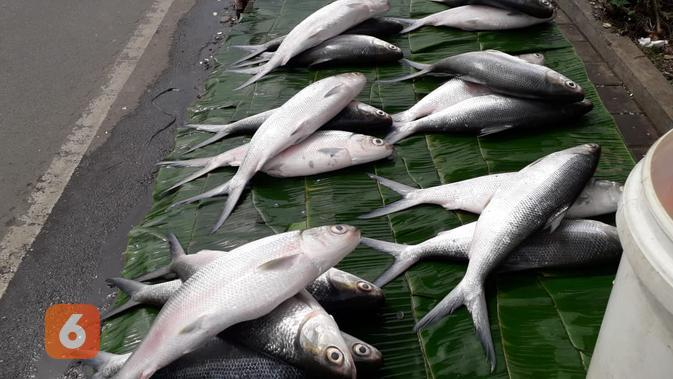 Jelang Imlek sejumlah pedagang menjajakan bandeng di Rawa Belong, Jakarta Barat (Liputan6.com/Komarudin)