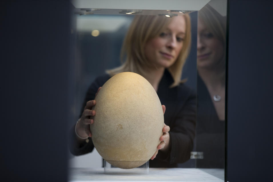 Christie's employee Amber Hailes poses for photographs with a sub-fossilised pre-17th century Elephant Bird egg at the auction house's premises in London, Wednesday, March 27, 2013.  The egg, which is estimated to fetch 20,000 to 30,000 pounds ($30,210 to $45,315 and 23,645 to 35,467 euro) in the forthcoming Travel, Science and Natural History sale on April 24, measures over 100 times the average size of a chicken egg, and stands at 21cm in diameter and 30cm in height.  The extinct Elephant Bird species was native to Madagascar and among the heaviest known birds.  (AP Photo/Matt Dunham)