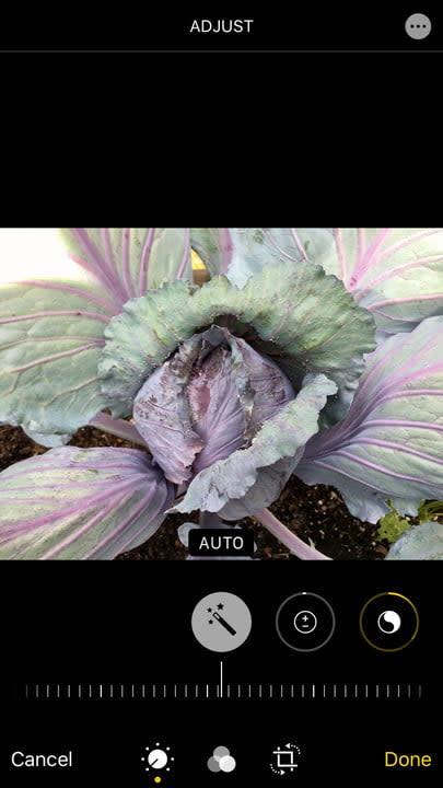 Photos iOS 13