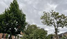 熱帶風暴導致紐約全市2萬餘棵樹木受損 皇后區最多