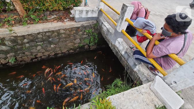 Warga melihat ikan yang dibudidaya di sepanjang saluran air di Puri Pamulang, Tangerang Selatan, Minggu (13/8/2020). Jenis ikan mas yang dibudidaya warga memberikan manfaat ekonomis di masa pandemi Covid19. (Liputan6.com/Fery Pradolo)