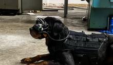 美軍開發狗用 AR 眼鏡,讓軍犬與領犬員遠距離也能互動