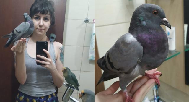 女人在巴拉那州收养鸽子并给互联网带来惊喜(照片:Playback / Twitter @miaueissoai)