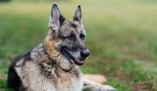 蔡推文悼拜登愛犬 向佐竟嗆「舔狗」:每天死那麼多人 悼念儀式在哪裏?