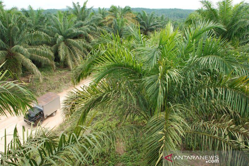 Masyarakat di Barito Utara tuntut kemitraan perkebunan kelapa sawit