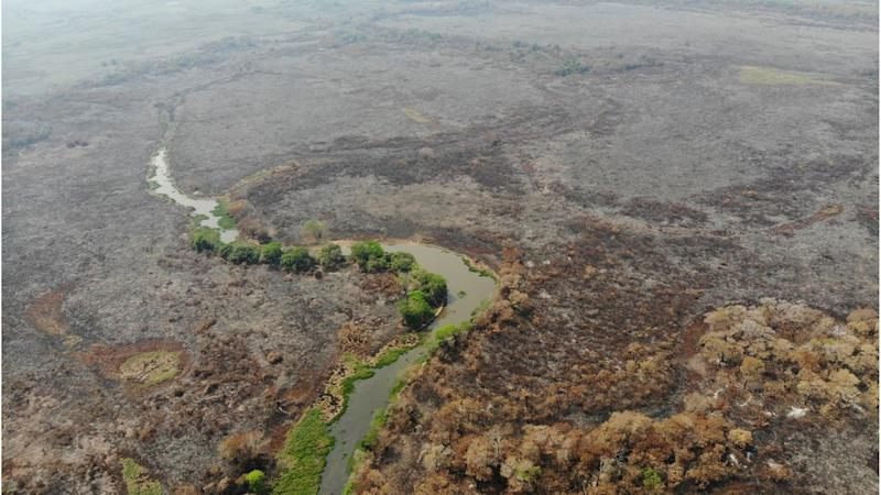 A few green trees stand among burnt land in Brazil`s Pantanal