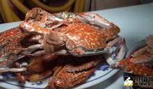 影/線西花腳蟹正當季 讓饕客回味無窮
