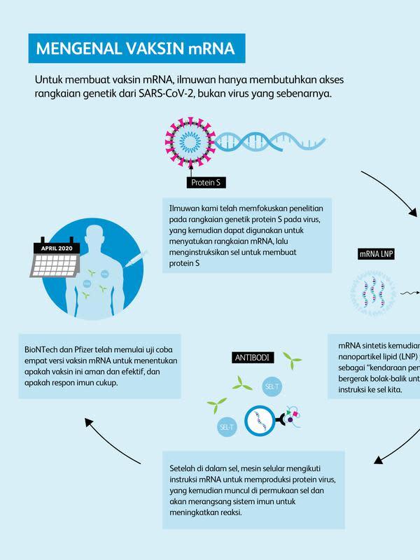 Infografis Pfizer vaksin mRNA Covid-19