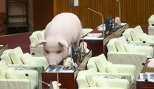 藍要求「零檢出萊豬」進北市!柯文哲批註:logic不通,零檢出還叫萊豬?