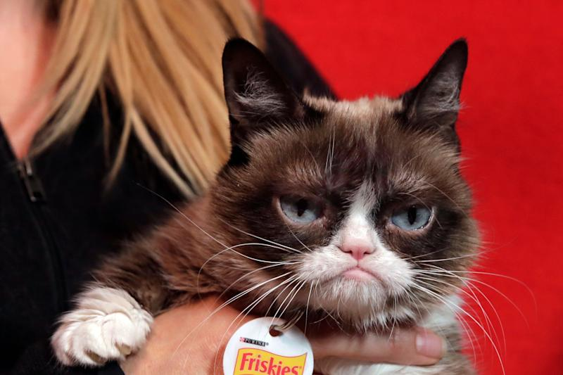The Grumpy Cat has died