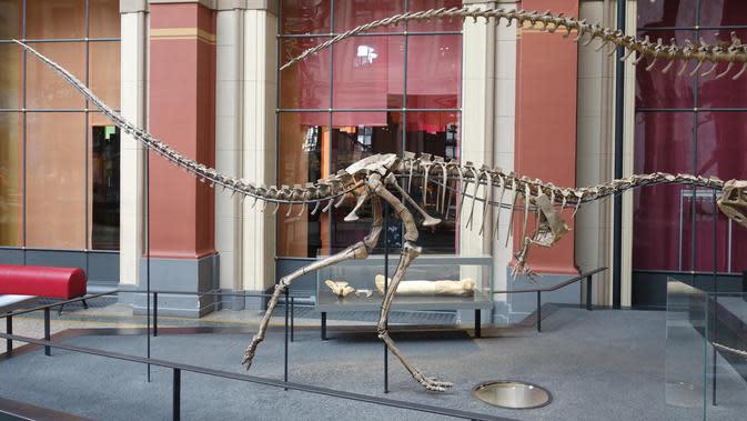Elaphrosaur, dinonsaurus ompong yang langka. (Wikimedia)