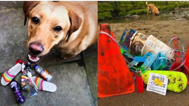 Hebat! Seekor Anjing Bersihkan 250.000 Sampah di Pantai Selama 2 Tahun