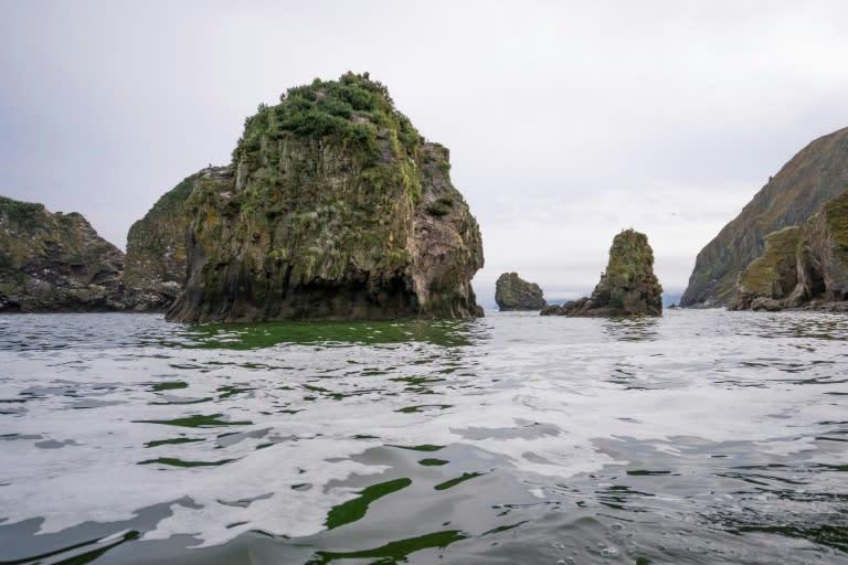 Kamchatka marine life death caused by algae: Russian scientist