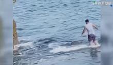 遊客小琉球抱海龜 目擊者出面制止