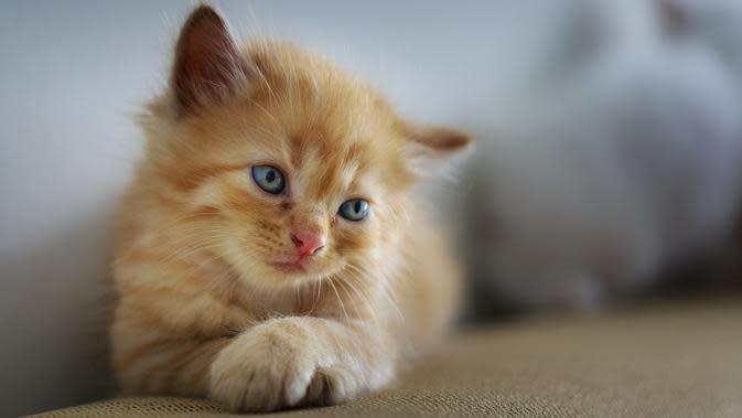Tergiling dalam Mesin Cuci Selama 12 Menit, Kucing Ini Selamat Tanpa Cedera