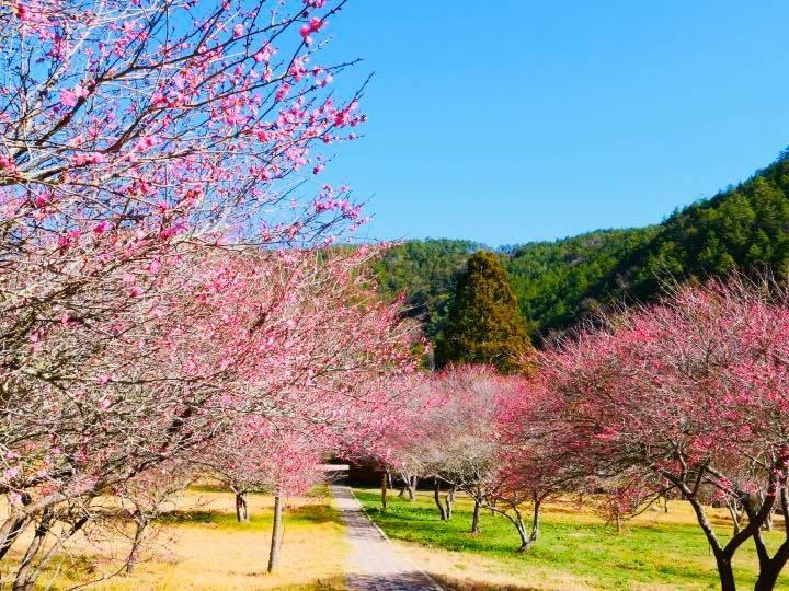 台中武陵農場